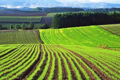 Особенности пользования землей общего пользования и ответственность за самозахват территорий