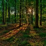 Дарение земельного участка родственнику чтобы сделка не оказалась обременением