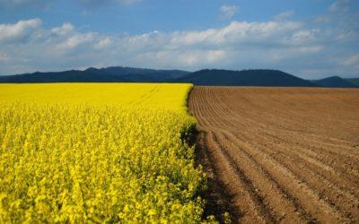 Разрешенное использование земельных участков: виды, как изменить, что такое целевое назначение наделов населенных пунктов и других типов?
