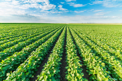 Аренда земель сельскохозяйственного назначения в 2019 году: образец договора, стоимость